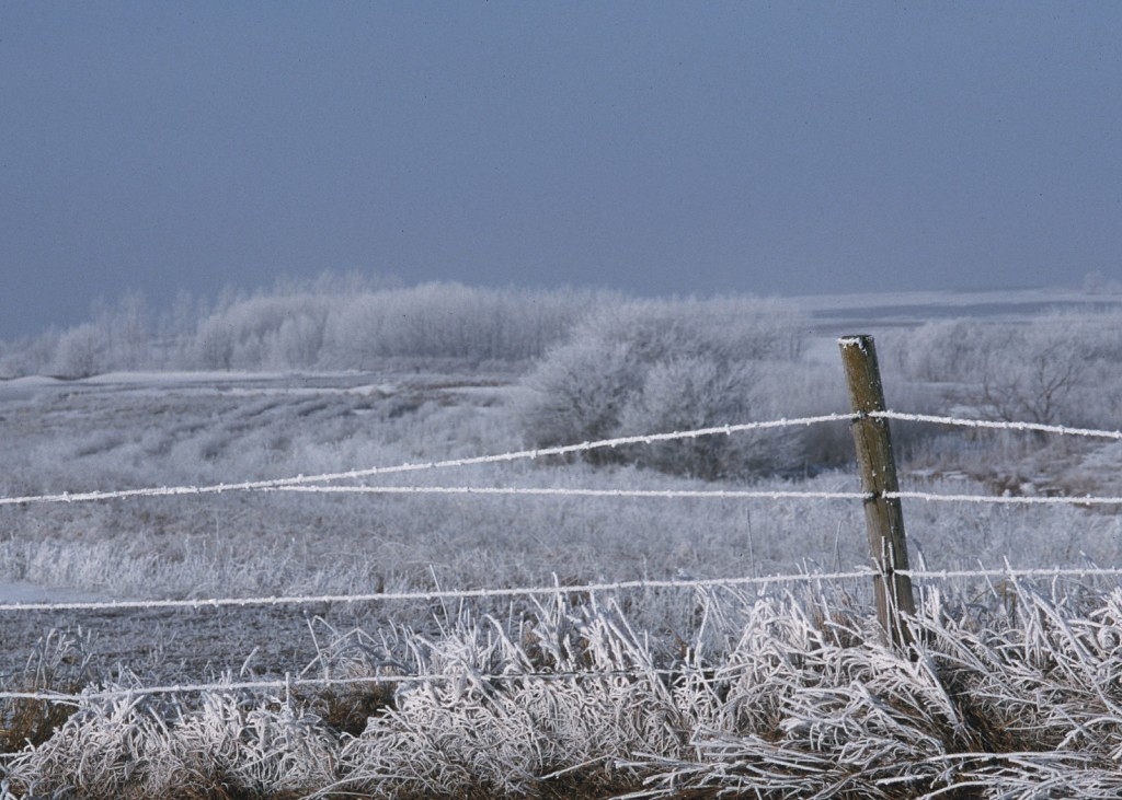 NRCS Frost Covered Buffer Strip